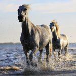 horse-1542480