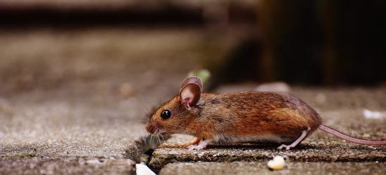 mouse-1708192