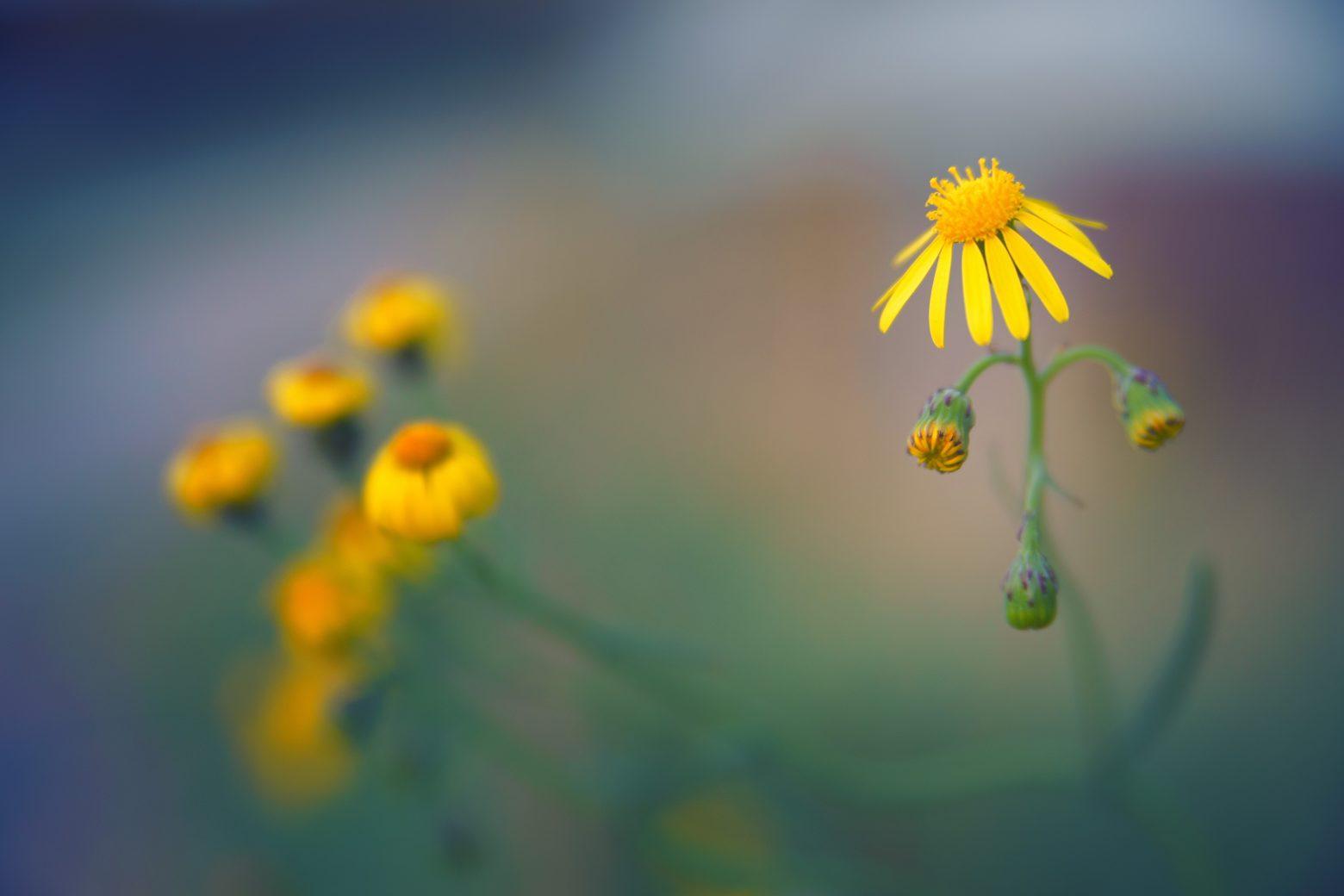 blossom-3741724