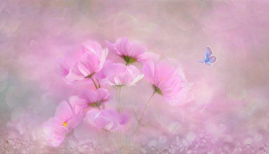 flower-3054734