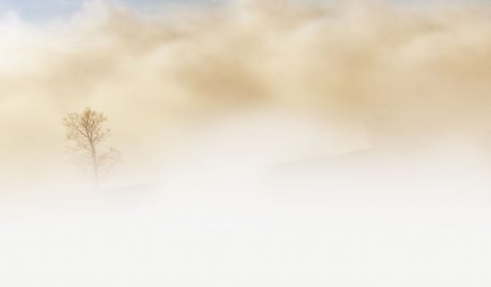 fog-240075