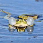 frog-3678832