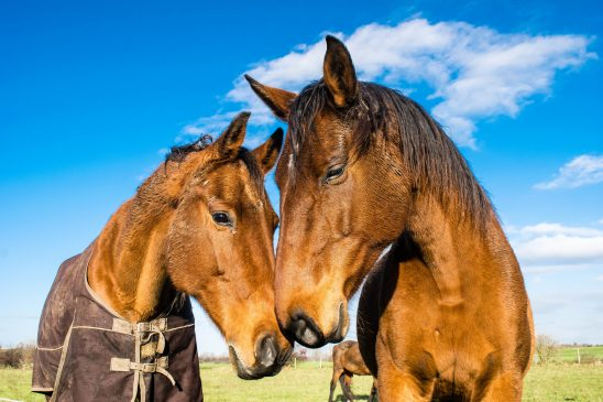 horses-1078676