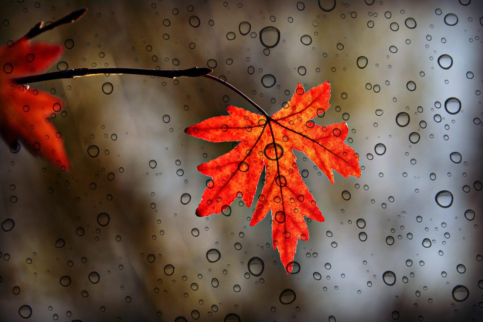 leaf-3865014