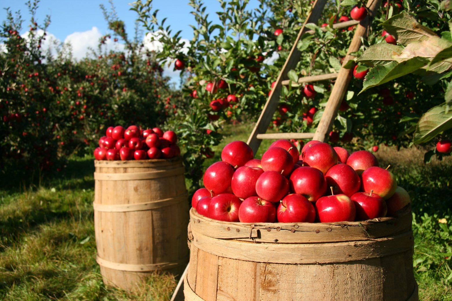 orchard-1872997