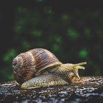 snail-3705324