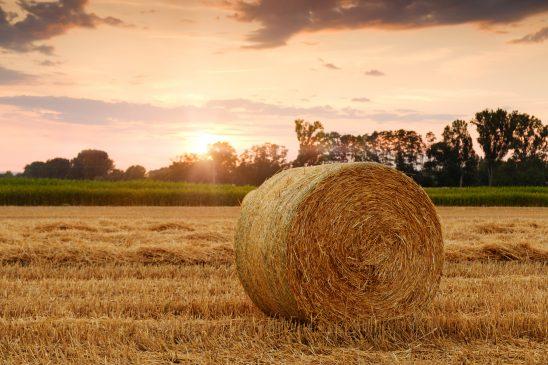 straw-bales-3521063