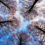 tree-tops-2991743