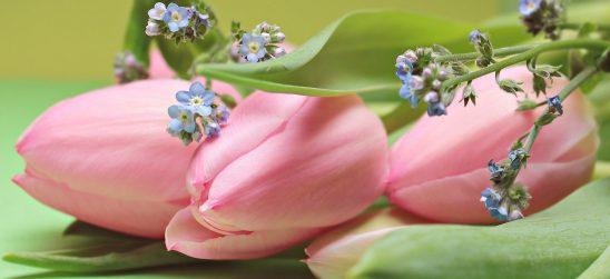 tulips-2167753