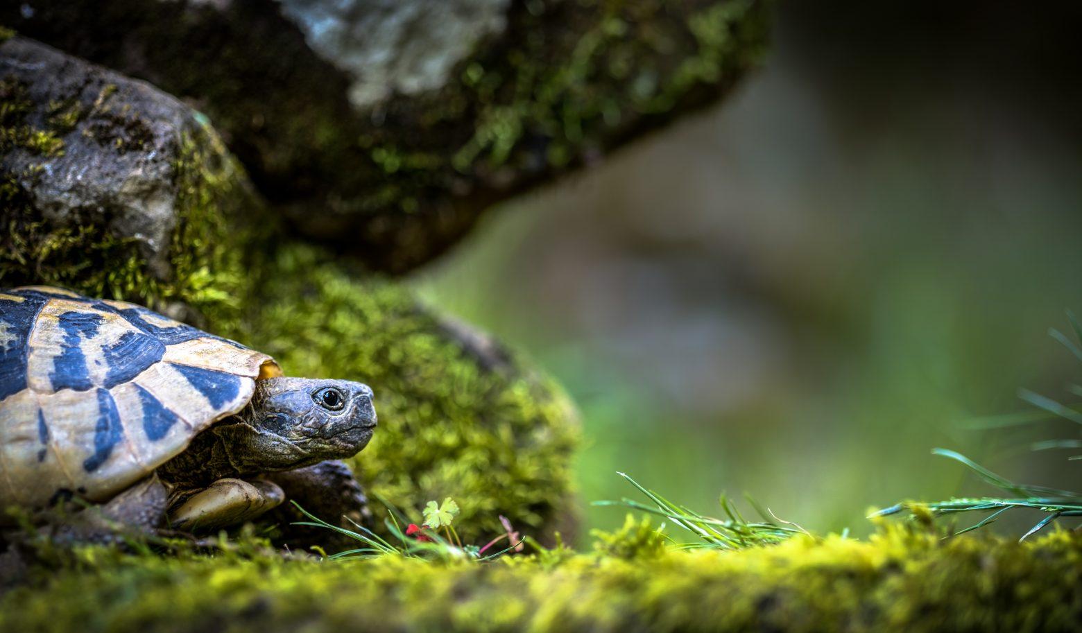 turtle-3340266