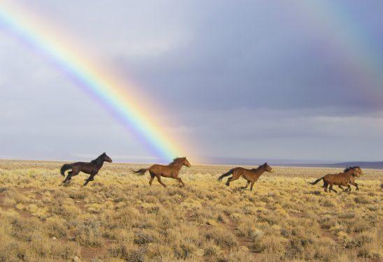 wild-horses-2239420