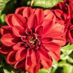 flower-1690020