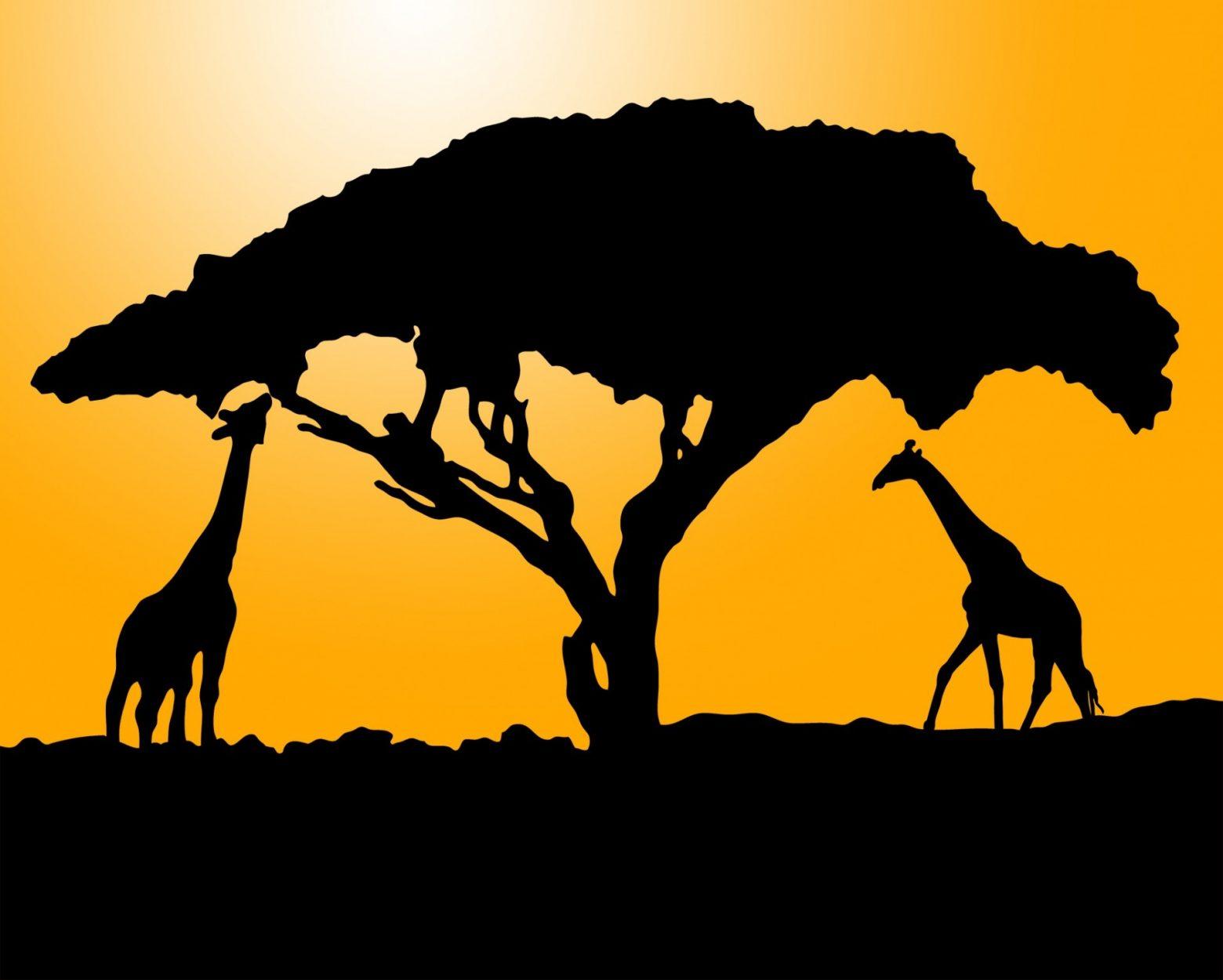 giraffe-220266