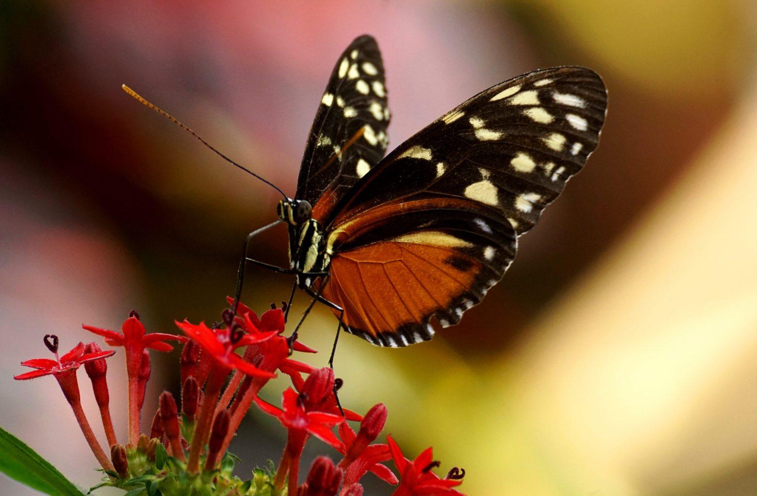 butterfly-3333179