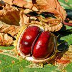 chestnut-2740751