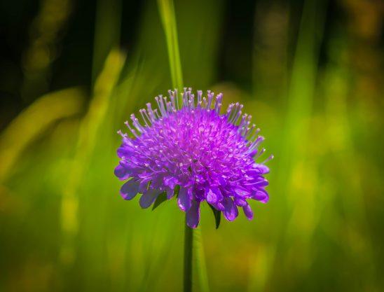 flower-1444548