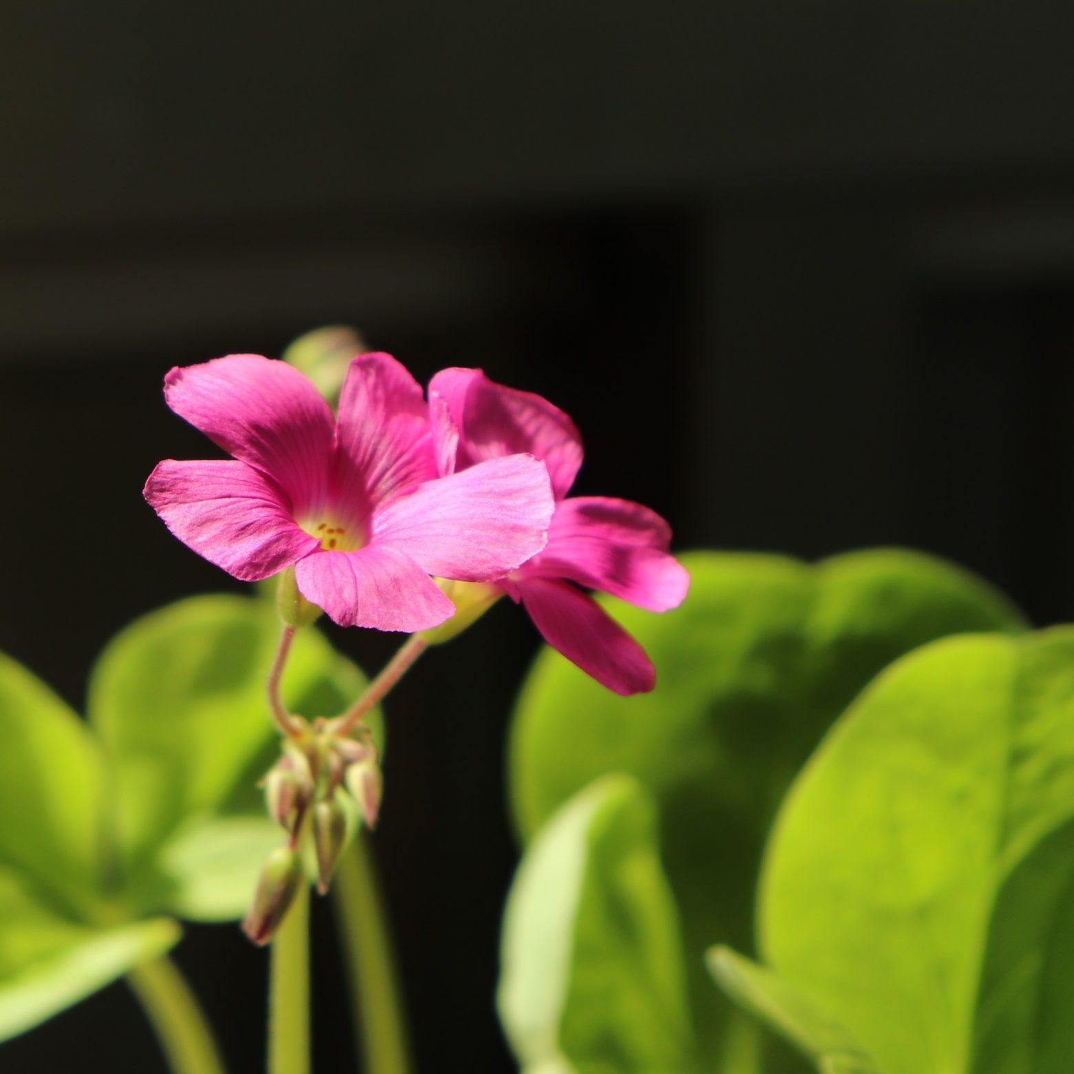 flower-2685946