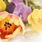 flower-3222631