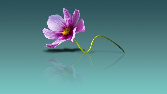 flower-wallpaper-2295463