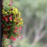 flowers-1580587