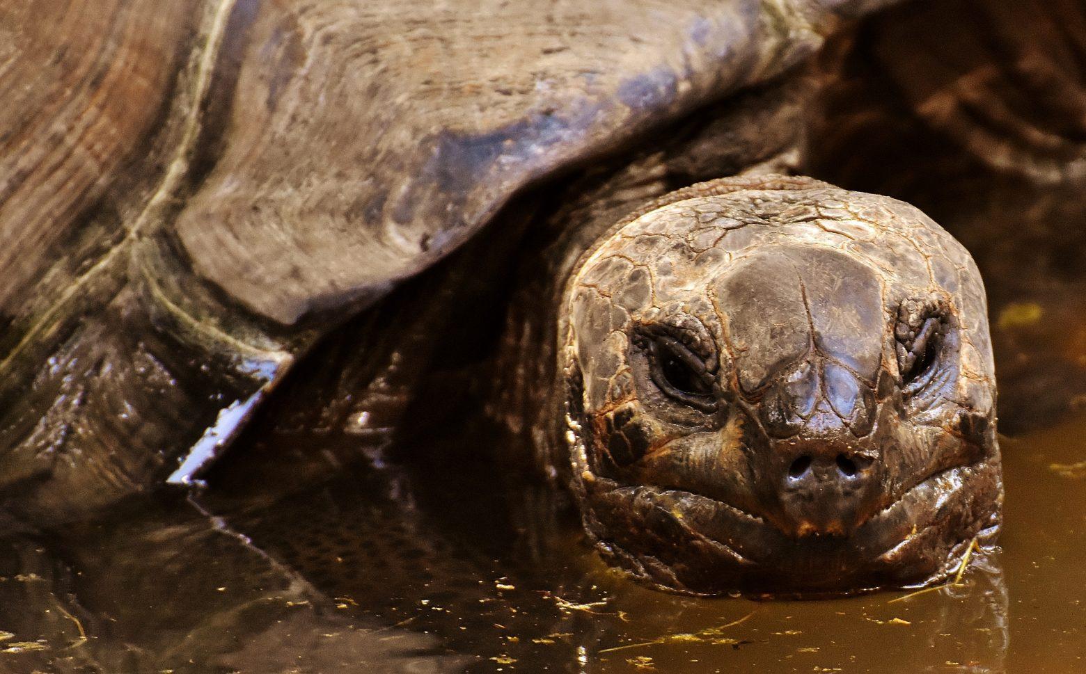 giant-tortoises-3315107