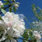 apple-1633747