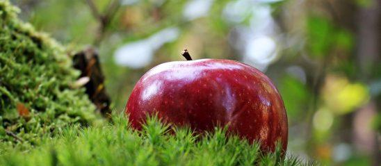 apple-1702338