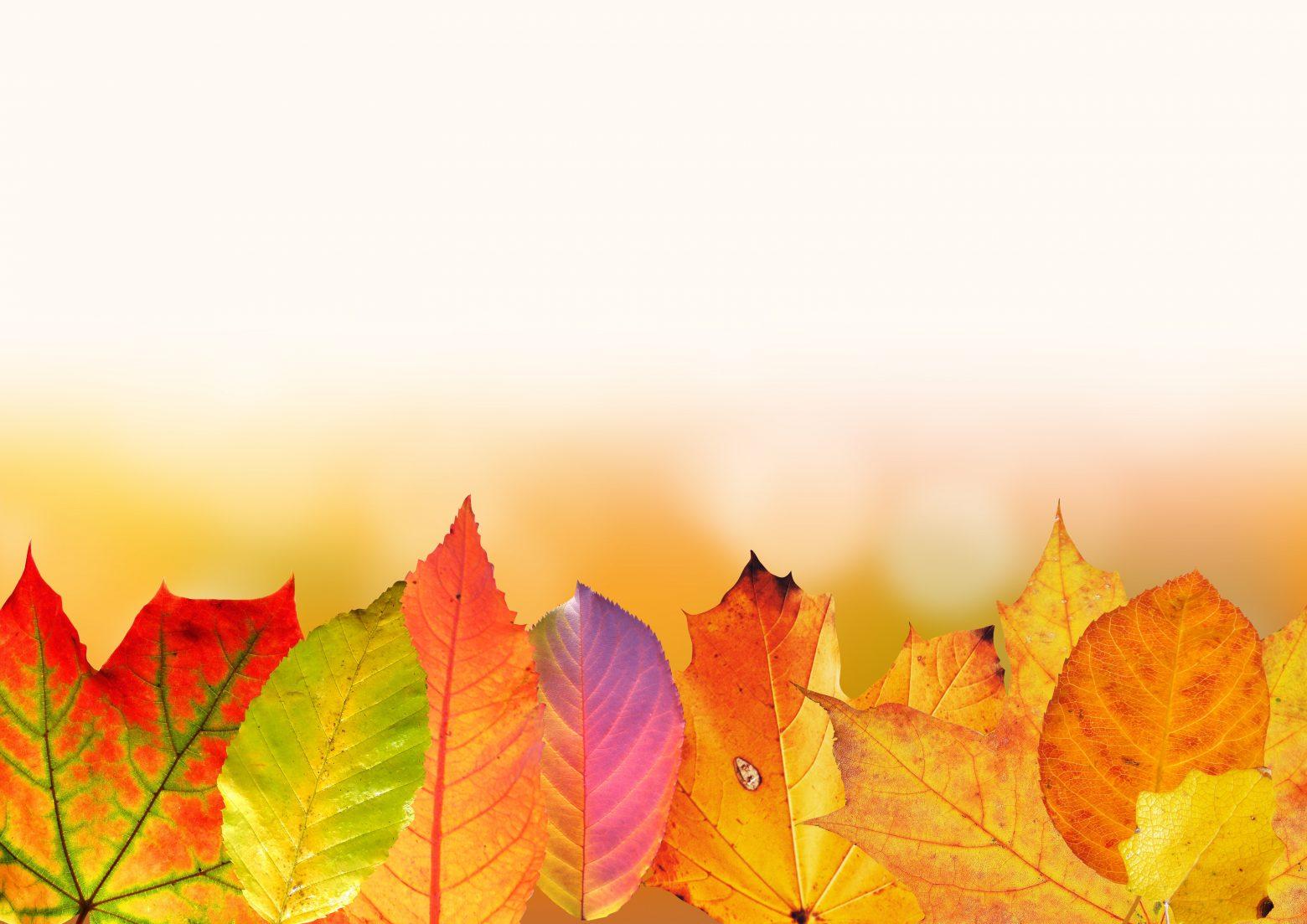 autumn-1649440