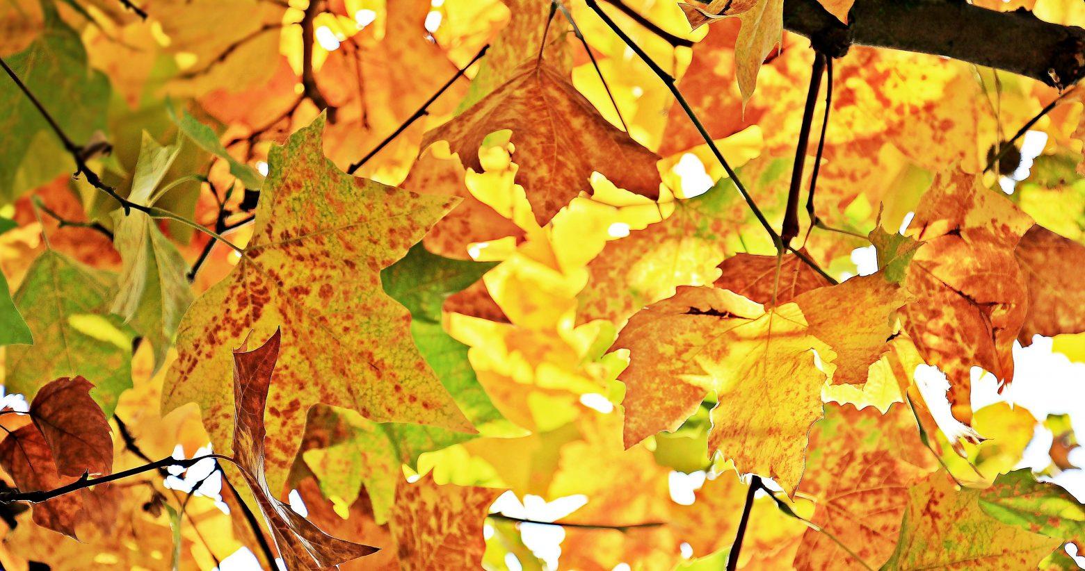 autumn-1655915