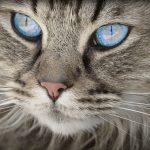 cat-1508613