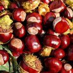 chestnut-1710430