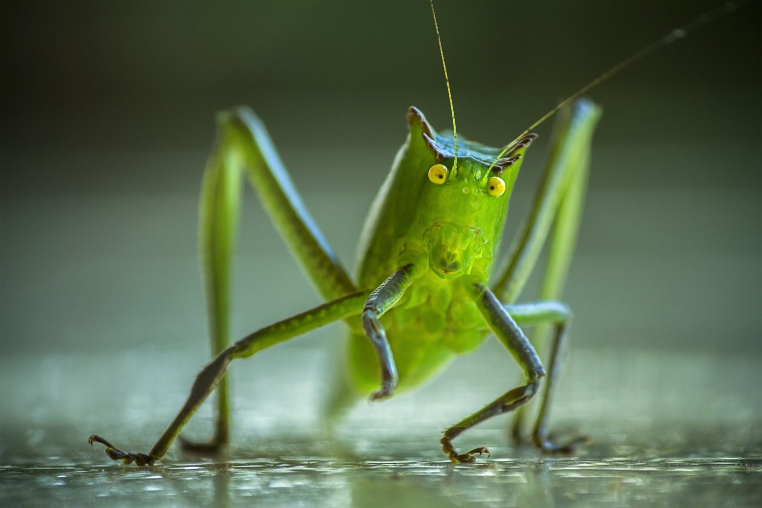 cricket-1345065