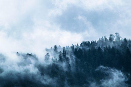 fog-1535201