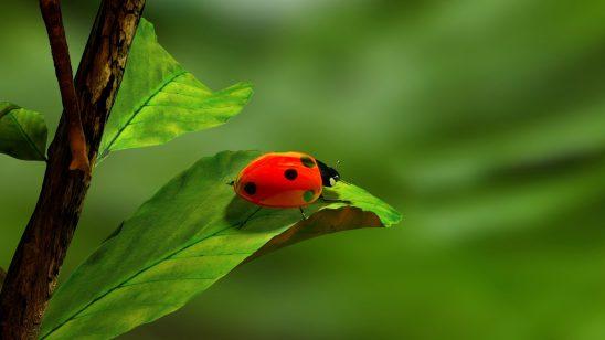 ladybird-163480
