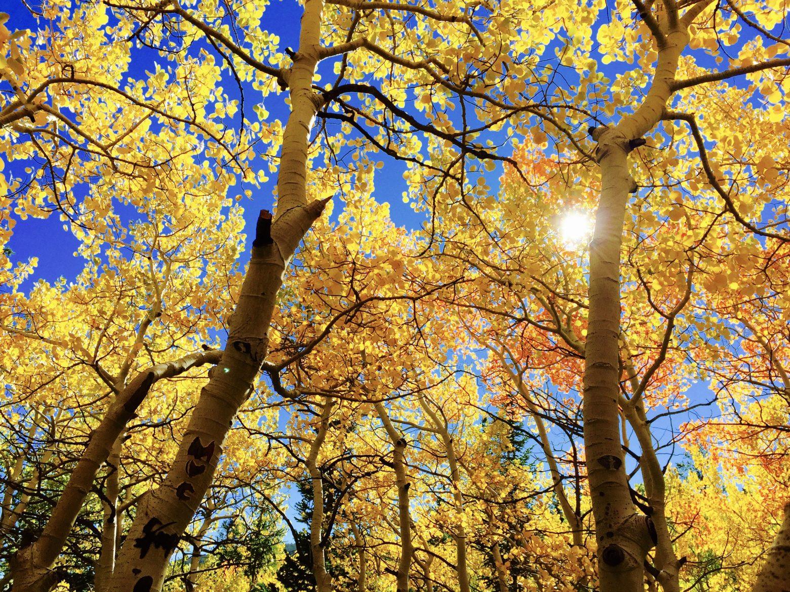 leaves-1363766