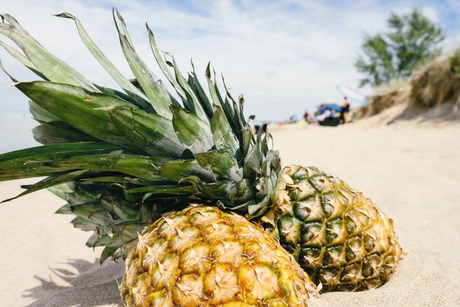 pineapple-1602345