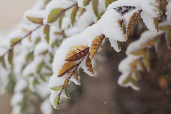 snow-1081880