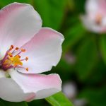 spring-1360468