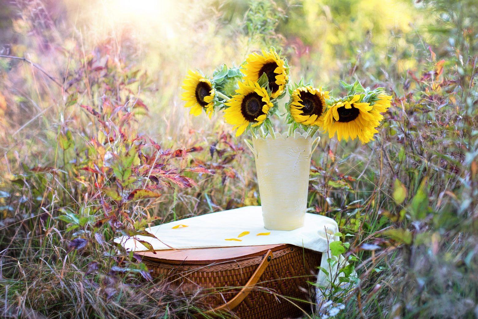 sunflowers-1719119