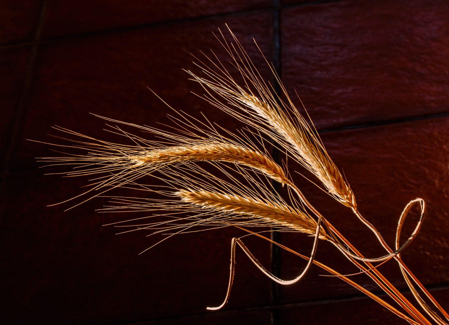 barley-676551