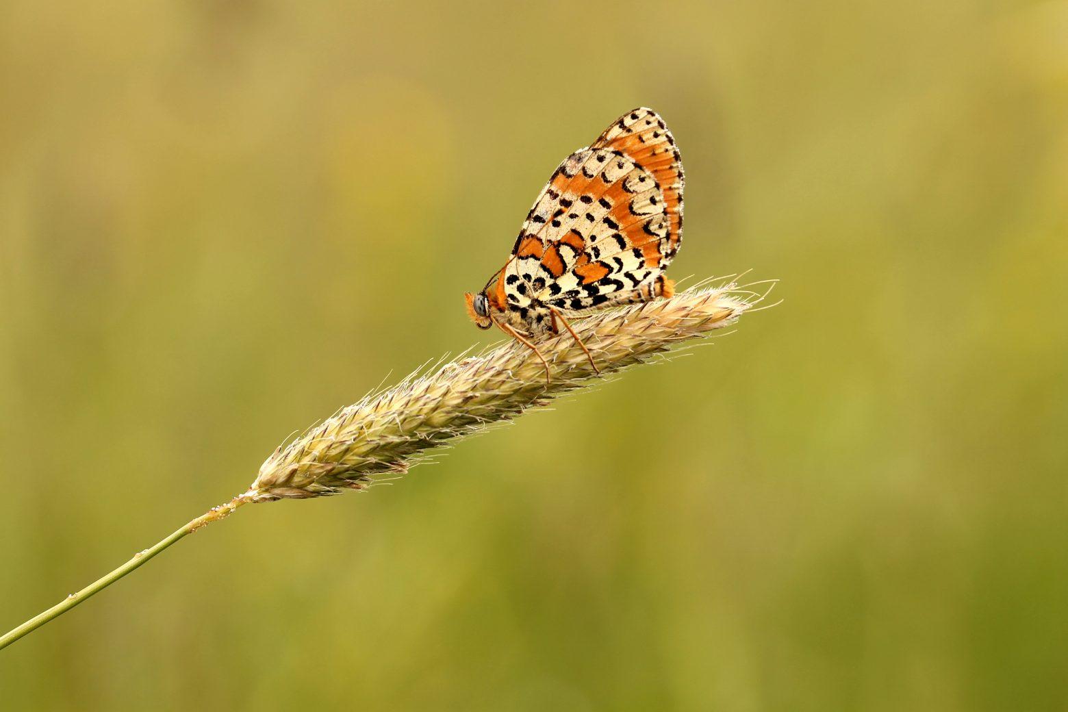 butterfly-1757511