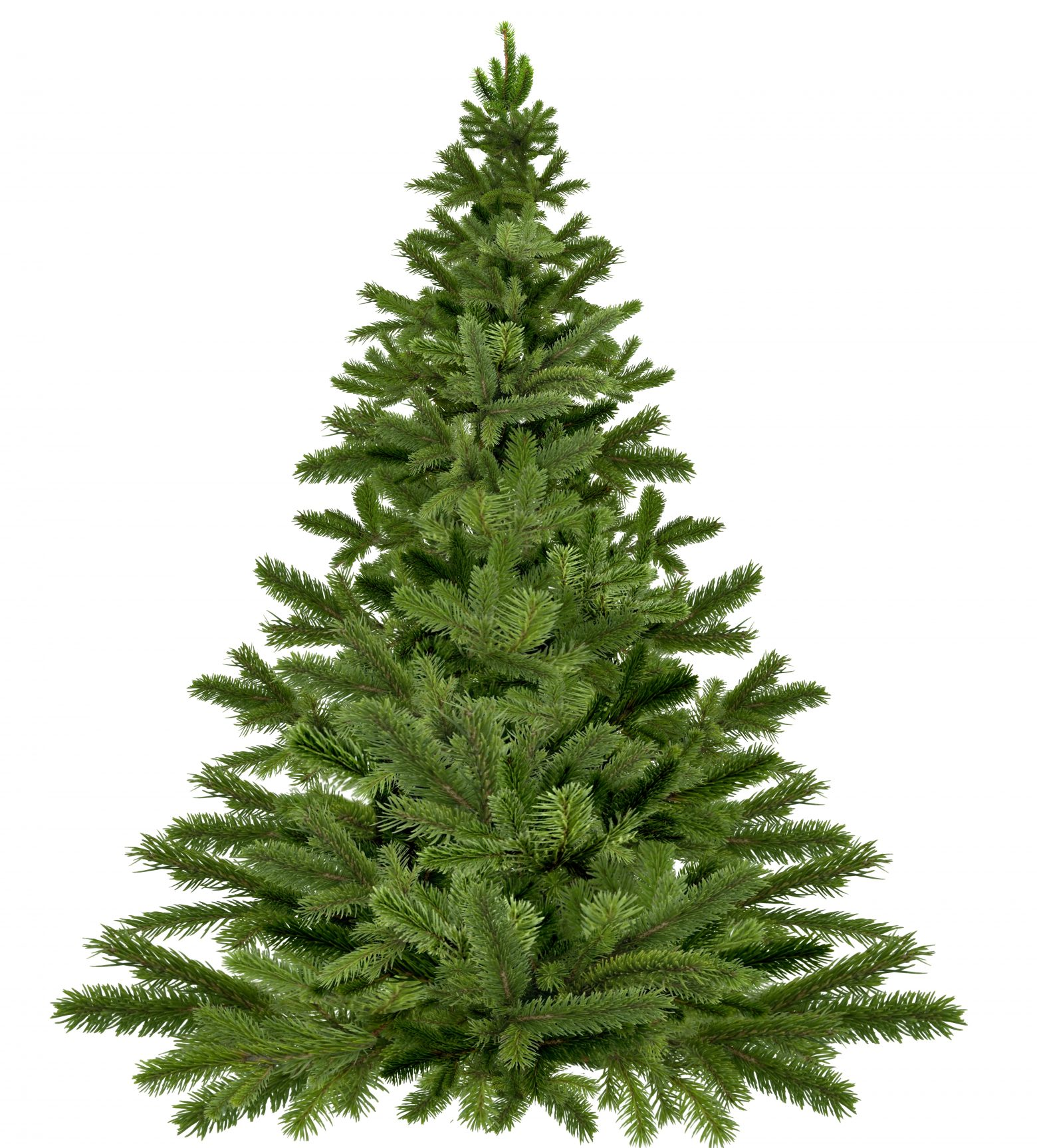 christmas-tree-1792267
