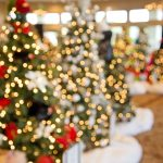 christmas-trees-1042542