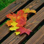 fall-foliage-1740841