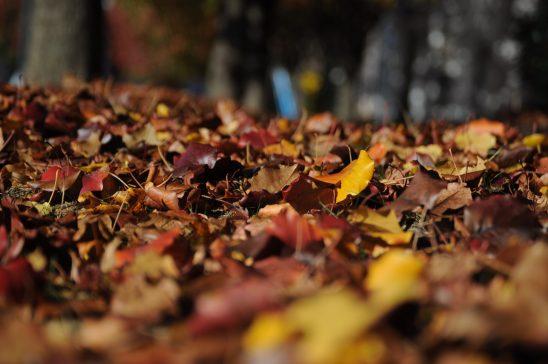 leaves-101329