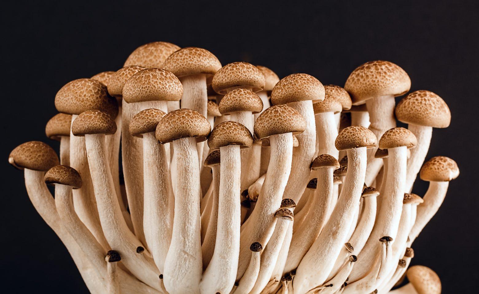 mushroom-389421