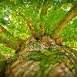 tree-1750784