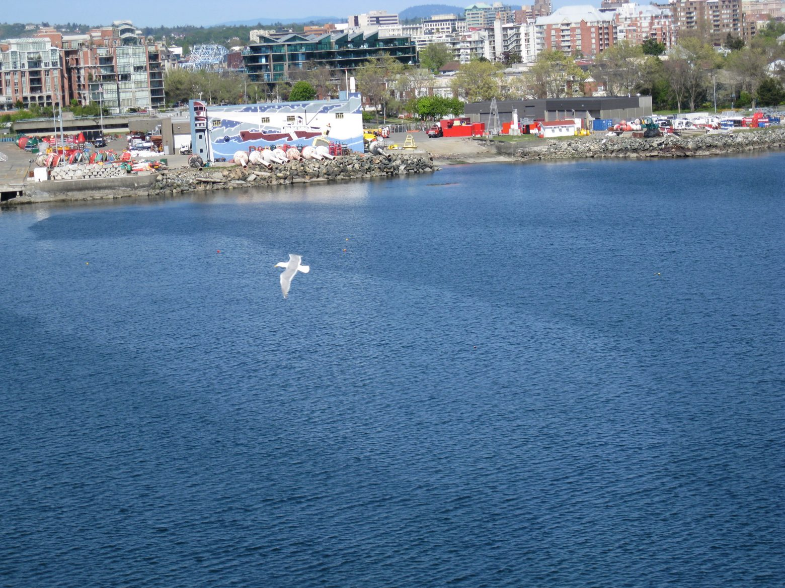 seagull-over-the-water