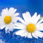 flower-1473704