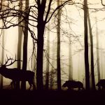 forest-1818690